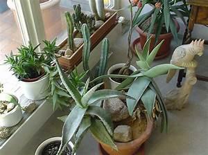 Sukkulenten Arten Bilder : sukkulente pflanzen mein garten ratgeber ~ Lizthompson.info Haus und Dekorationen