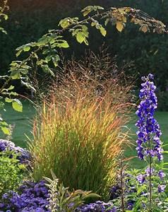 Welche Pflanzen Passen Zu Rosen : welche pflanzen passen zu grsern rote image welche ~ Lizthompson.info Haus und Dekorationen