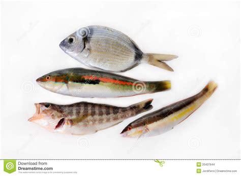 Kleine Fische Stockfoto Bild Von Nahrungsmittel Grob