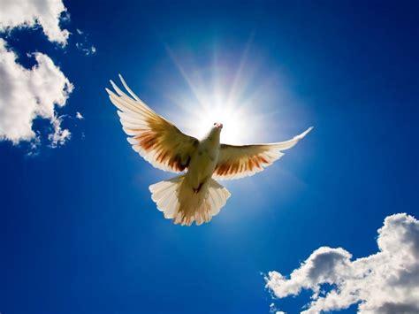 top beautiful bird flying wallpaper hd wallpapers