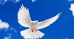 wallpapers: White Dove Wallpapers