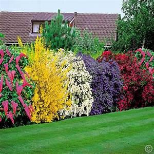Wandbilder Günstig Online Bestellen : bl hende hecke 5 heckenpflanzen g nstig online kaufen bestellen sie schnell und bequem online ~ Indierocktalk.com Haus und Dekorationen