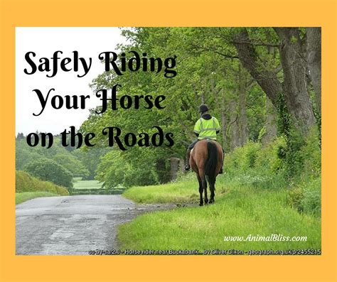 horse riding safely roads rules apply