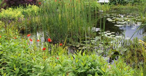 Teichpflanzen Fuer Verschiedene Wasserzonen by Teichpflanzen F 252 R Jede Wassertiefe Mein Sch 246 Ner Garten