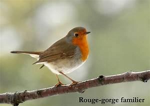 Oiseau Jaune Et Bleu : petit oiseau noir et orange aux petits oiseaux jitep ~ Melissatoandfro.com Idées de Décoration