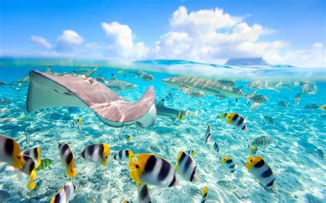 Fish Background Tropical Fish Backgrounds 183