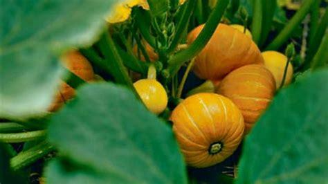 9 Ideas To Use Leftover Pumpkins Recipe  Pocket Change