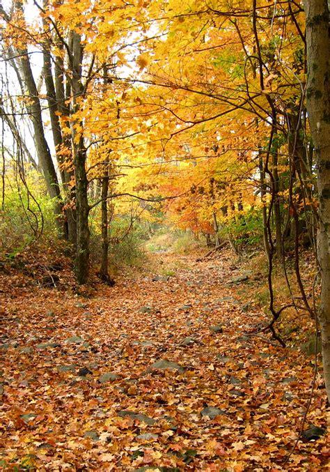 cedar ridge preserve  jersey trails association