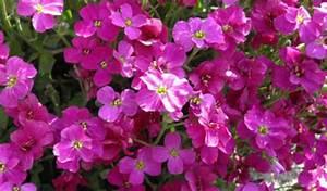 Couvre Sol Vivace : plantes vivaces couvre sol pour le soleil ~ Premium-room.com Idées de Décoration