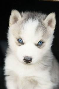 I'm just a little husky.