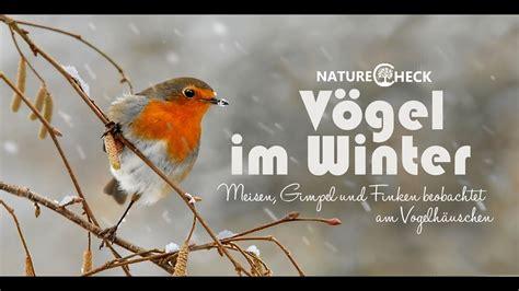 voegel im winter futterhaeuschen und meisenknoedel youtube