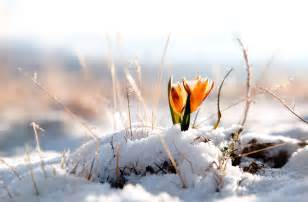 flower basket winter snow flower 1818747