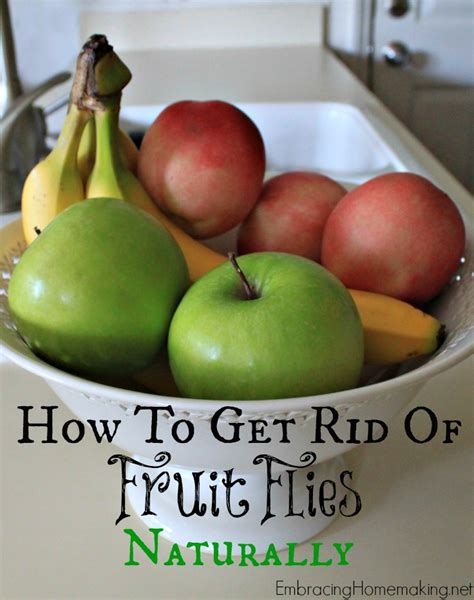 how to get rid of fruit flies naturally embracing