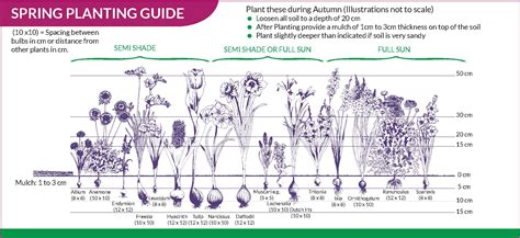 planting guide bulbs direct