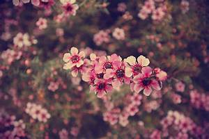 hipster floral wallpapers wide - Download Hd hipster ...