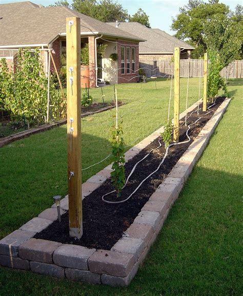 build a grape arbor grape trellis design grape trellis is complete gardening pinterest grape trellis