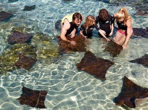 discovery cove orlando tickets nadar golfinhos em orlando ticket discovery cove
