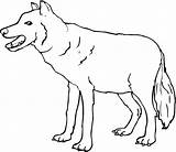 Wolf Coloring Pages Gray Printable sketch template