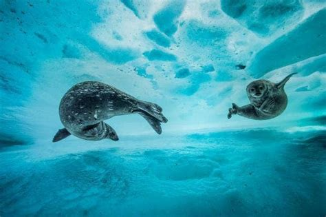 wildlife photographer   year  finalists announced