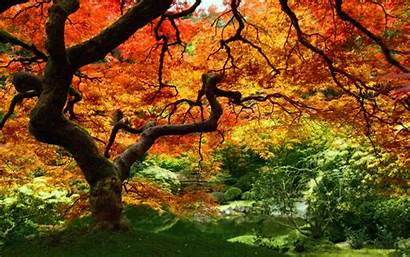 Fall Autumn Trees Computer Backgrounds Wallpapers Nature