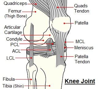 Knee Pain When Bending: Causes & Treatment