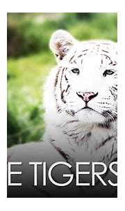 White Tigers - YouTube