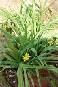 Grass Plants Identification