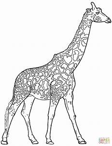 Realistic Giraffe Coloring Page Free Printable Coloring Pages