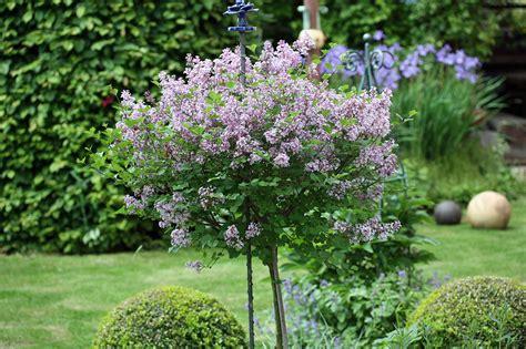 Mini Bäume Winterhart by Kleine B 228 Umchen F 252 R Den Garten Plants Gartenblog