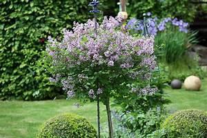 Kleine Bäume Für Garten : kleine b umchen f r den garten native plants gartenblog ~ A.2002-acura-tl-radio.info Haus und Dekorationen