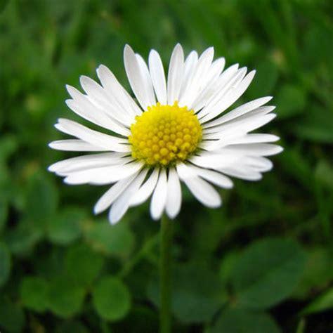 alle verschillende bloemen eetbare bloemen enkele eetbare bloemen soorten en