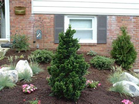 piante da giardino sempre verdi piante sempre verdi piante da giardino caratteristiche