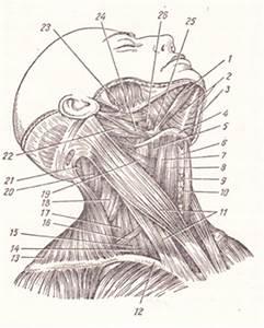 Боль от тазобедренного сустава в коленном