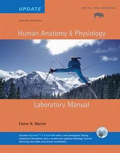 Marieb  Human Anatomy  U0026 Physiology Lab Manual  Fetal Pig