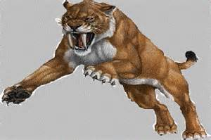 saber tooth cat barbourofelidae