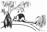 Anteater Coloring Pages Tree sketch template