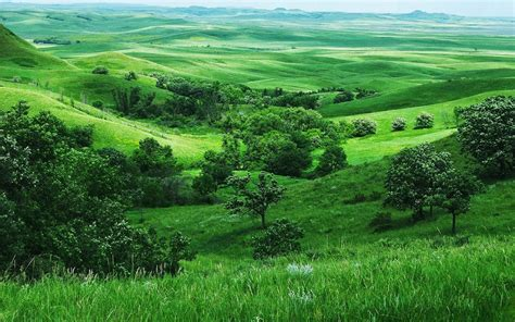 Lush Green Nature Hd Desktop Backgrounds Images Wallpapers