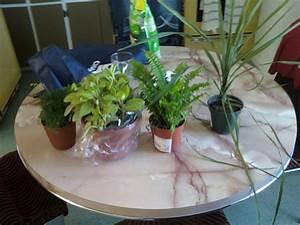 Acheter Terrarium Plante : plantes pour terrarium tropical ~ Teatrodelosmanantiales.com Idées de Décoration