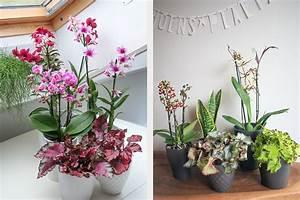 Plantes Pour Chambre : le style jungle urbaine gr ce aux plantes d int rieur conseils et astuces ~ Melissatoandfro.com Idées de Décoration
