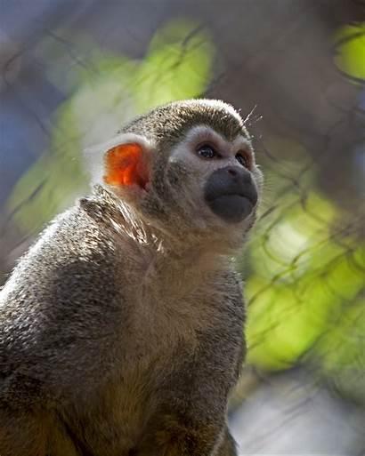 Monkey Squirrel Zoo Animals San Francisco Hours