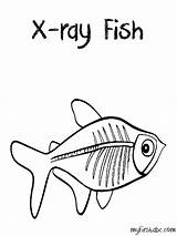 Ray Coloring Pages Fish Tetra Clipart Drawing Xenops Preschool Rays Animals Template Things Sketchite Draw Colouring Popular Sketch Getdrawings Sheets sketch template