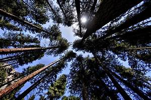 10 Most Haunted Forests in California