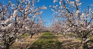Taille De Cerisier : le cerisier arbre prolifique dans le luberon ~ Melissatoandfro.com Idées de Décoration