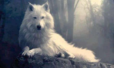 animales espirituales como saber cual es tu animal