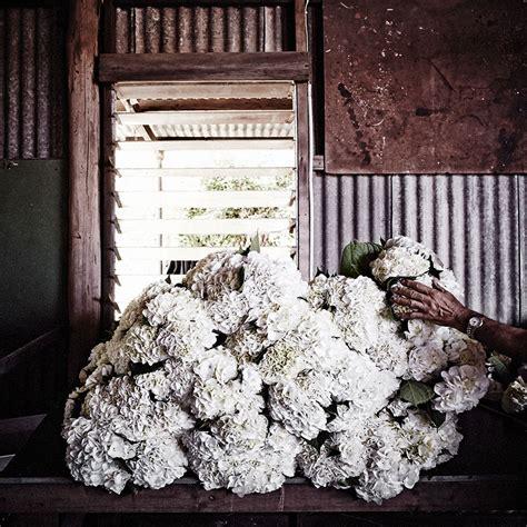 flowers lisa cooper  murdoch books
