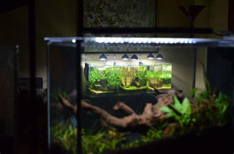 Fluval Spec Aquascape by Cryptkeeper54 S Fluval Spec V Aquascaping Aquarium