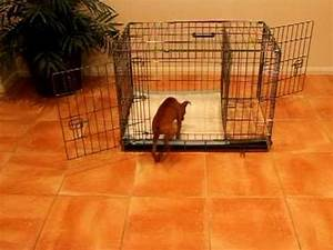 how to potty train a dog house training dog tips With the dog house training