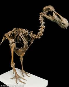 Natural History Museum to showcase its most important ...