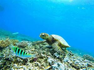Sea Turtle Habitat - Sea Turtle Facts and Information