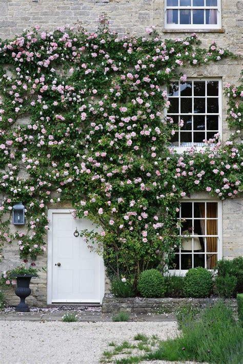 The 25+ Best Ideas About Front Door Plants On Pinterest